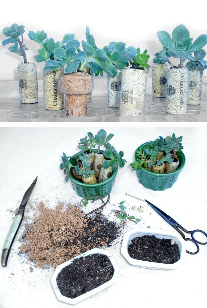 succulent_DIY